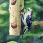 "Red Bellied Woodpecker 21.5"" x 25"" Watermedia $1150"