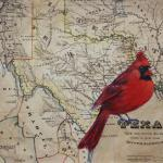 Cardinal 2 8 X 10 Acrylic on Vintage Map $300
