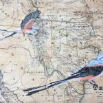 Scissortail  9 X 12 Acrylic on Vintage Map $375