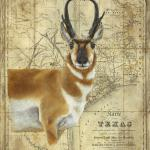 Pronghorn 24 x 30 Acrylic on Vintage Map $1800