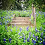 Steps and Bluebonnets Molly Block 16 x 20 Photography  $500