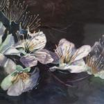 Nocturnal Apple Blossoms Joanie Hughes 16 x 20  $550